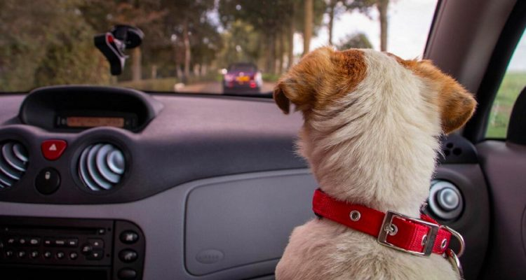 4 Tips for A Smooth-Sailing Road Trip With Your Pet Dog!