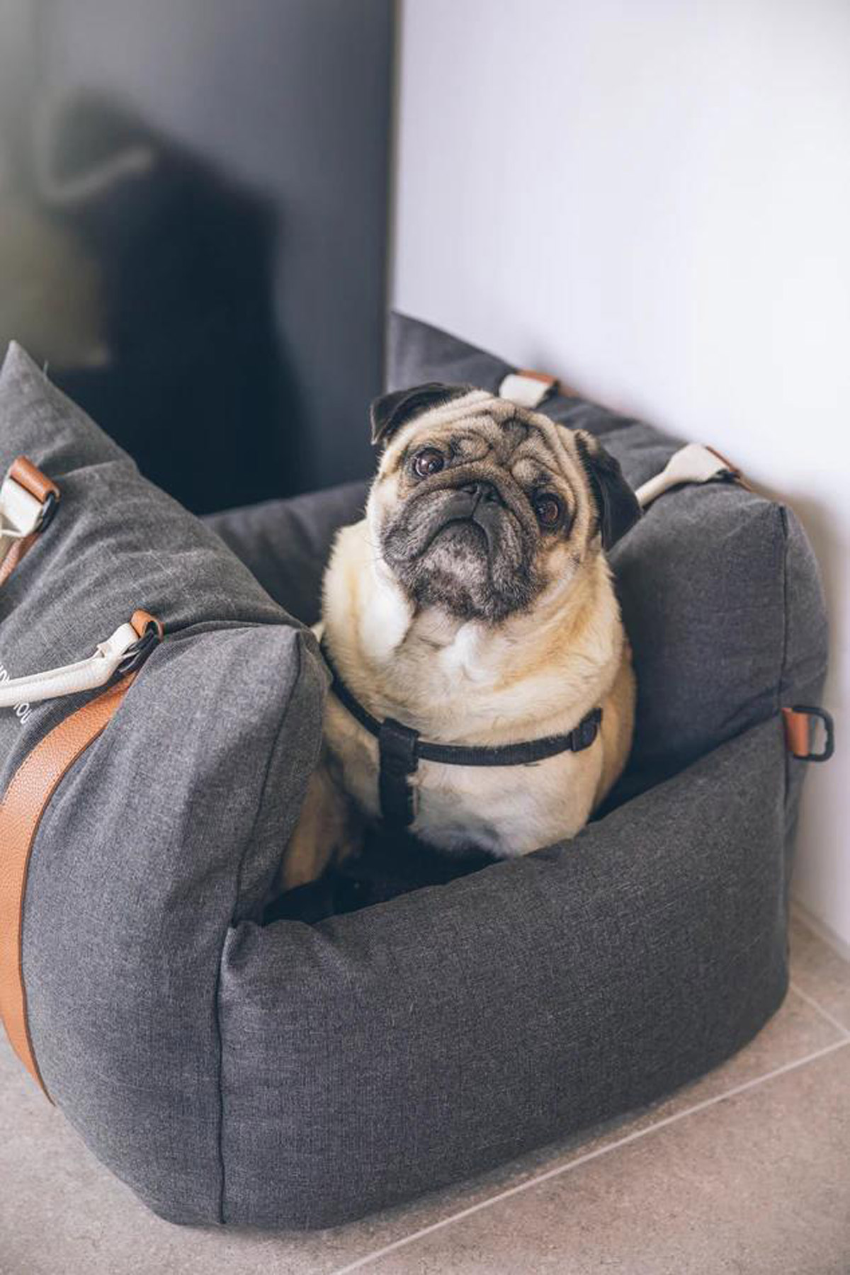 What to pack on a road trip with my dog, what to pack for a car ride with a dog, car necessities for a dog, pet necessities for a car ride