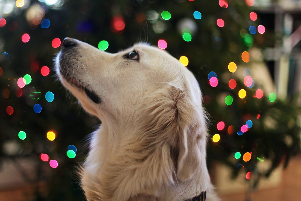 9 Christmas Gift Ideas for Your Dog to Defend Your Title as 'The Favourite Hooman'!