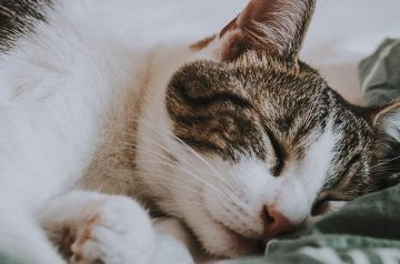 How to Care for a Cat with Cancer