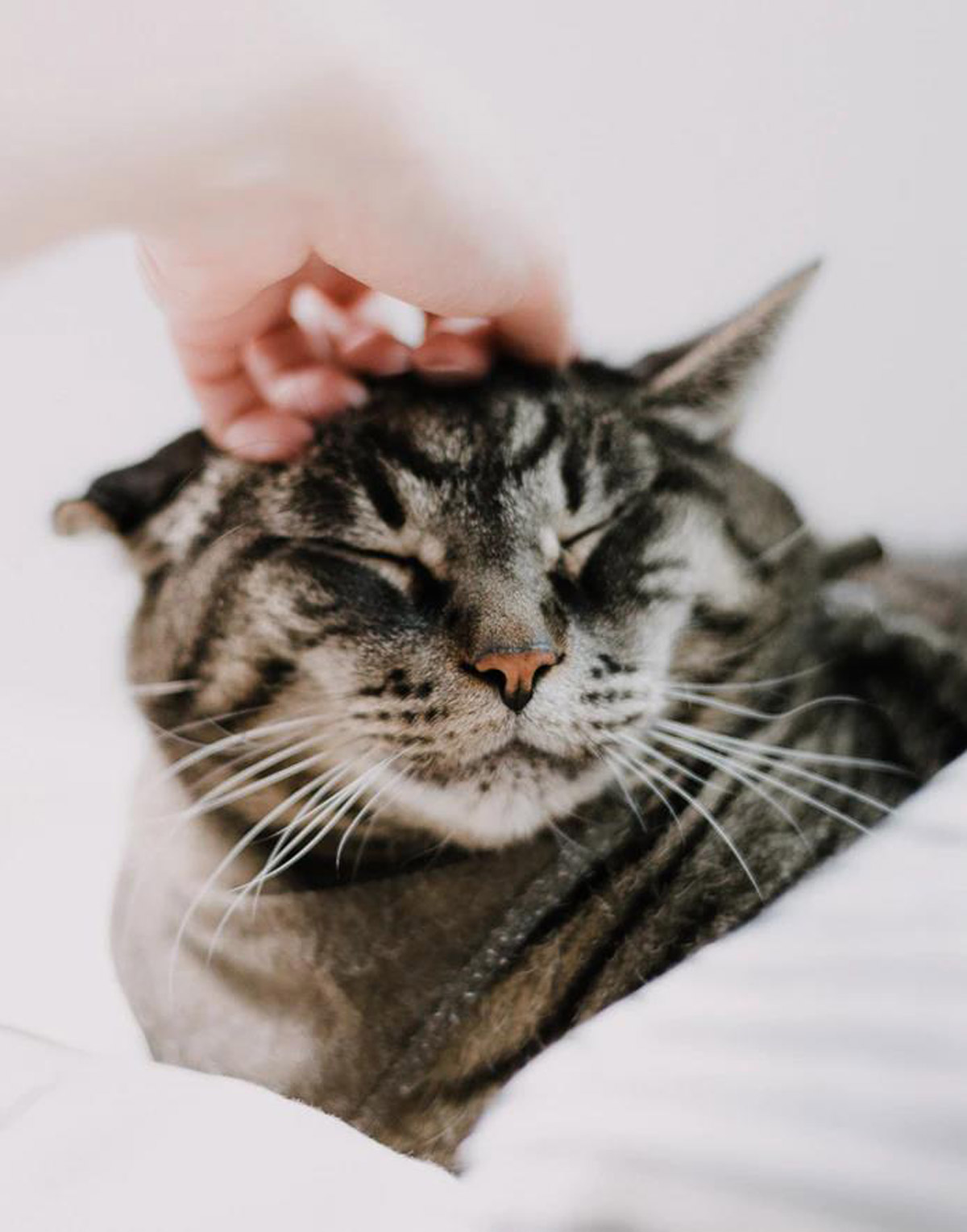 What can you do to help your cat with cancer? Read to find out more about the supportive and comfort care that you, the primary caregiver, can provide.