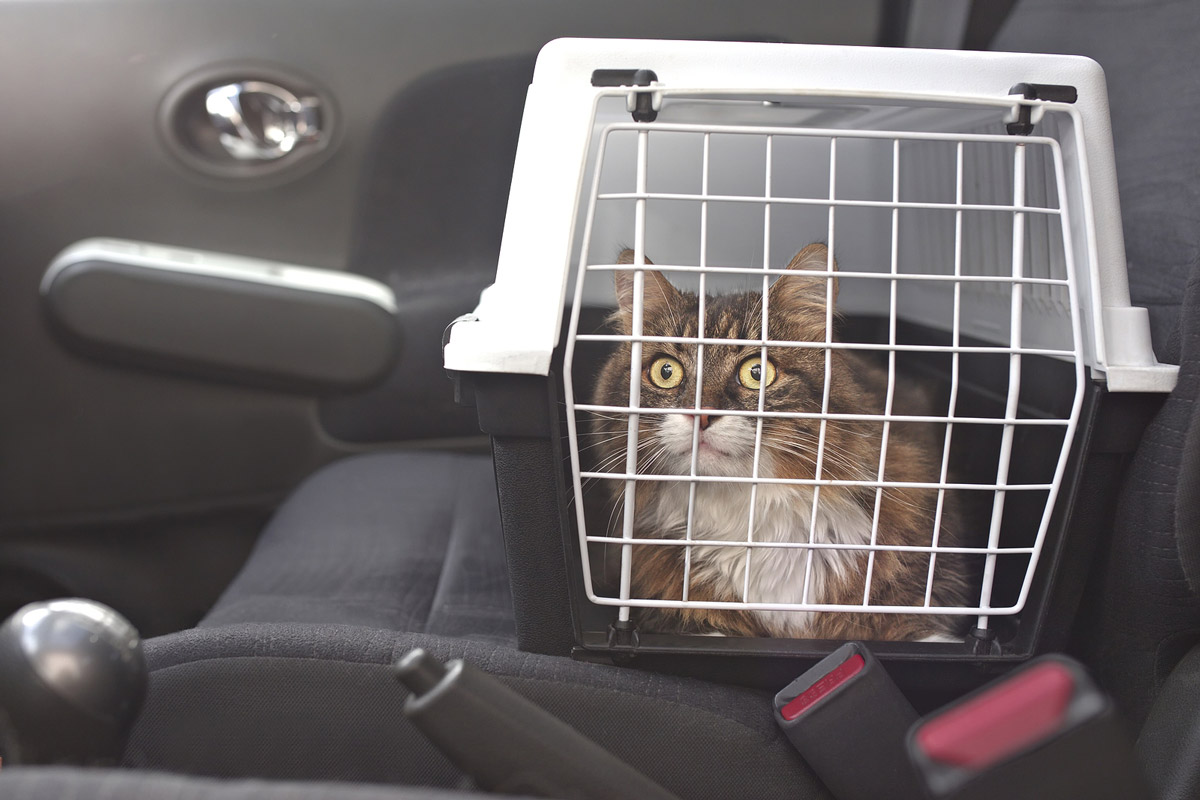 Driving with Pets: A Guide to Helping Your Dog & Cat Get Used to Car Rides