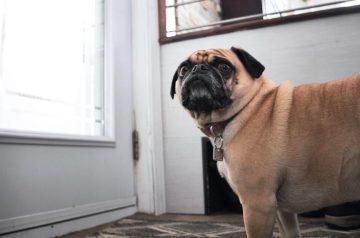 Epilepsy in Dogs: Help! My Dog is Having A Seizure!
