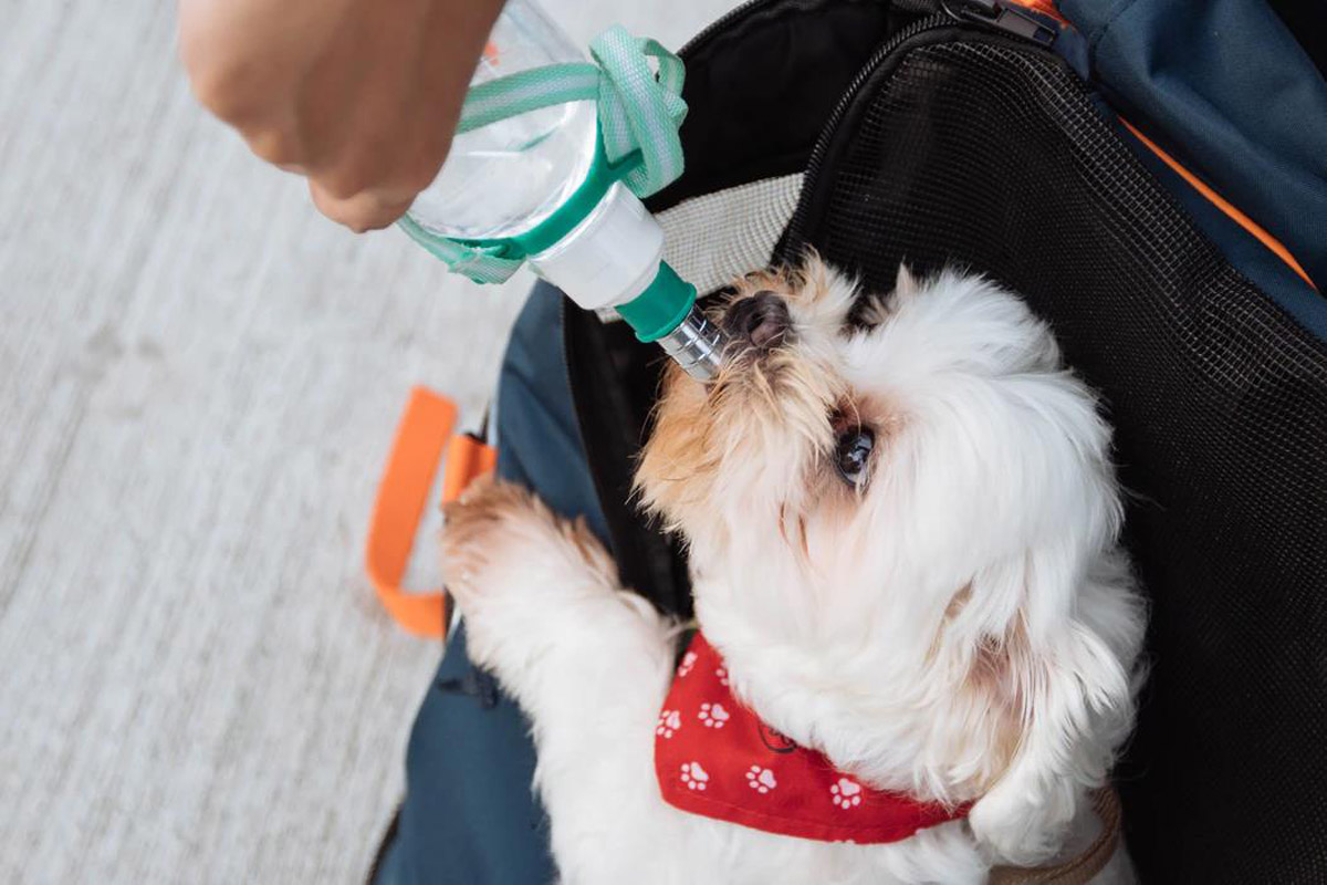 Silent Killers That Often Go Undetected in Dogs Until It's Too Late