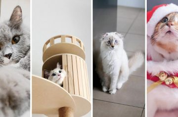 4 Cutest Cat Instagram Accounts to Follow (Local Edition)!