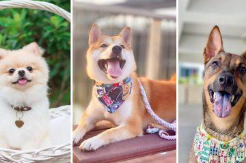 6 Cutest Dog Instagram Accounts to Follow (Local Edition)!