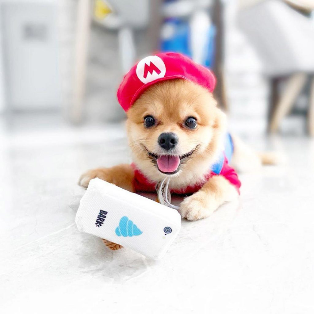 6 Cutest Dog Instagram Accounts to Follow (Local Edition)!