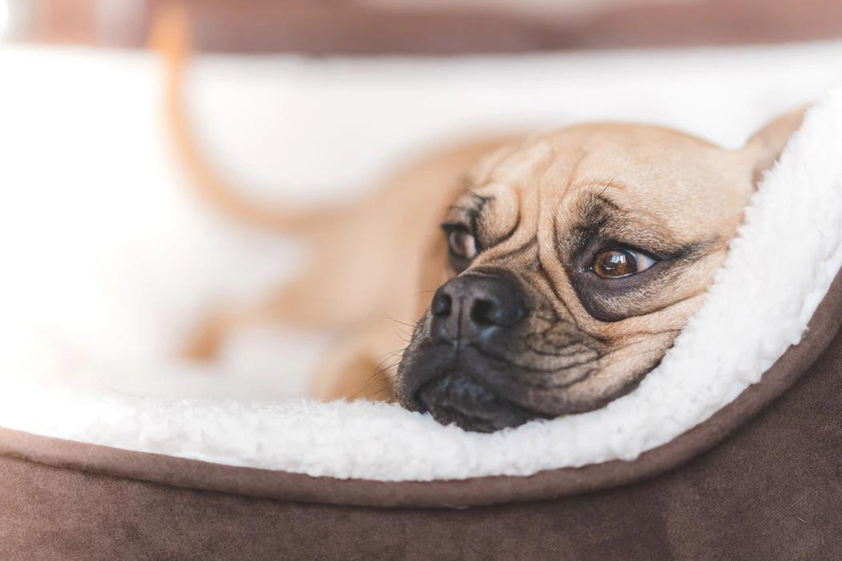 How to Care for a Pet with Cancer