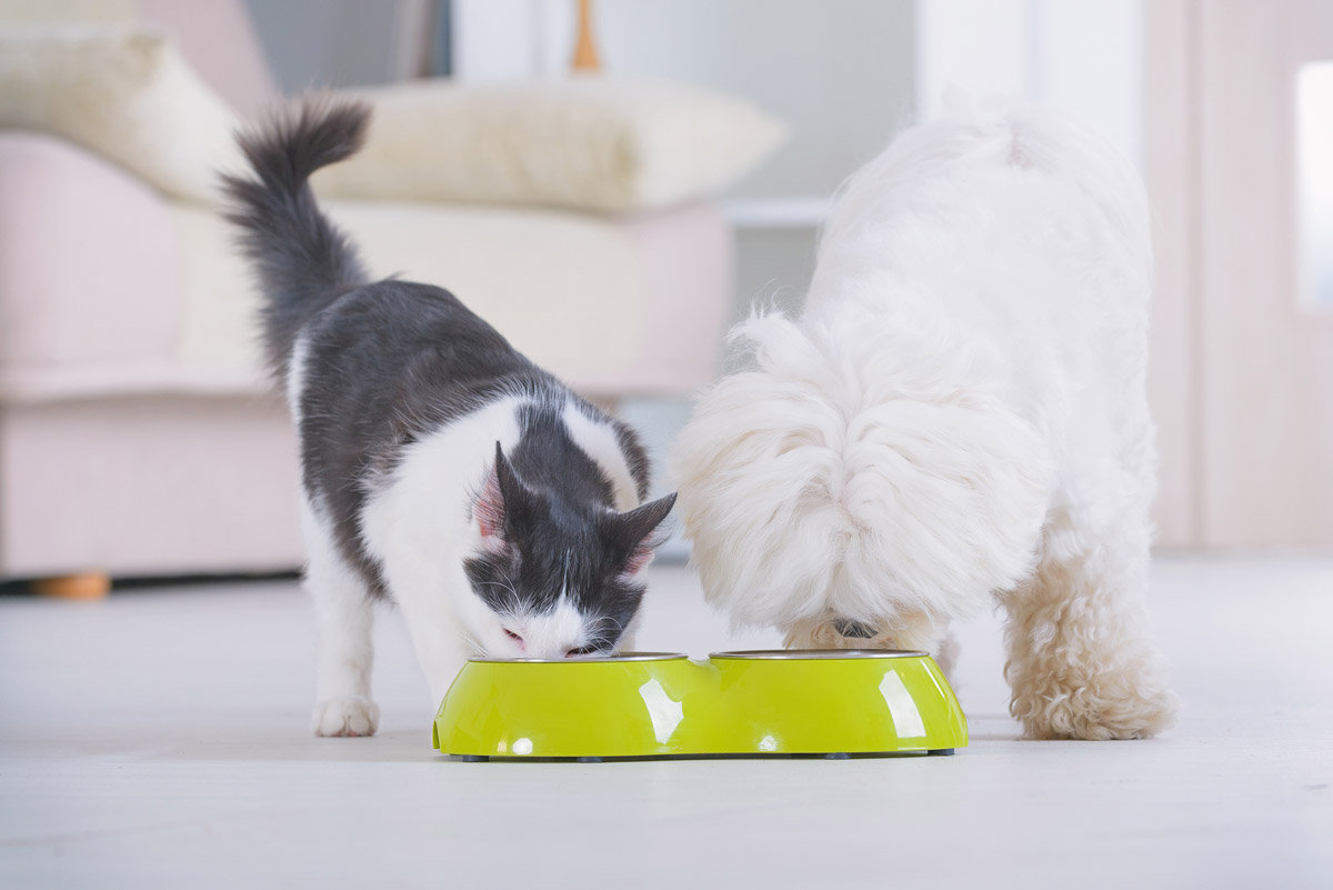 Are You Guilty of Making Your Pet a Picky Eater?