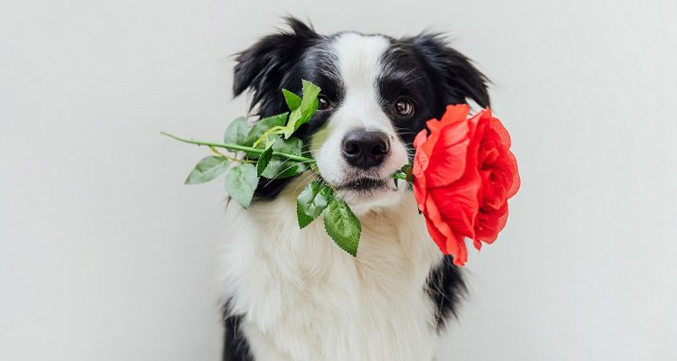 What's the Best Valentine's Day Gift for Your Pet According to It's Love Language?