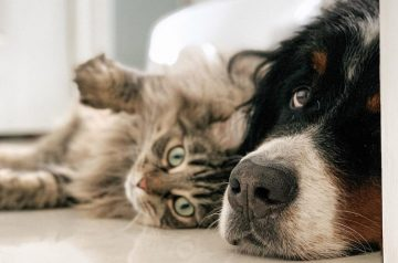 How to Check Your Pet's Health from Its Skin & Coat Conditions
