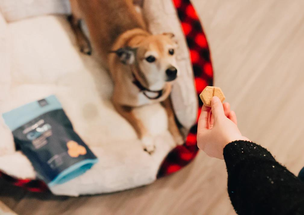 No White Chocolates, No Problem: Chocolate Substitutes and More to Spoil Your Pup