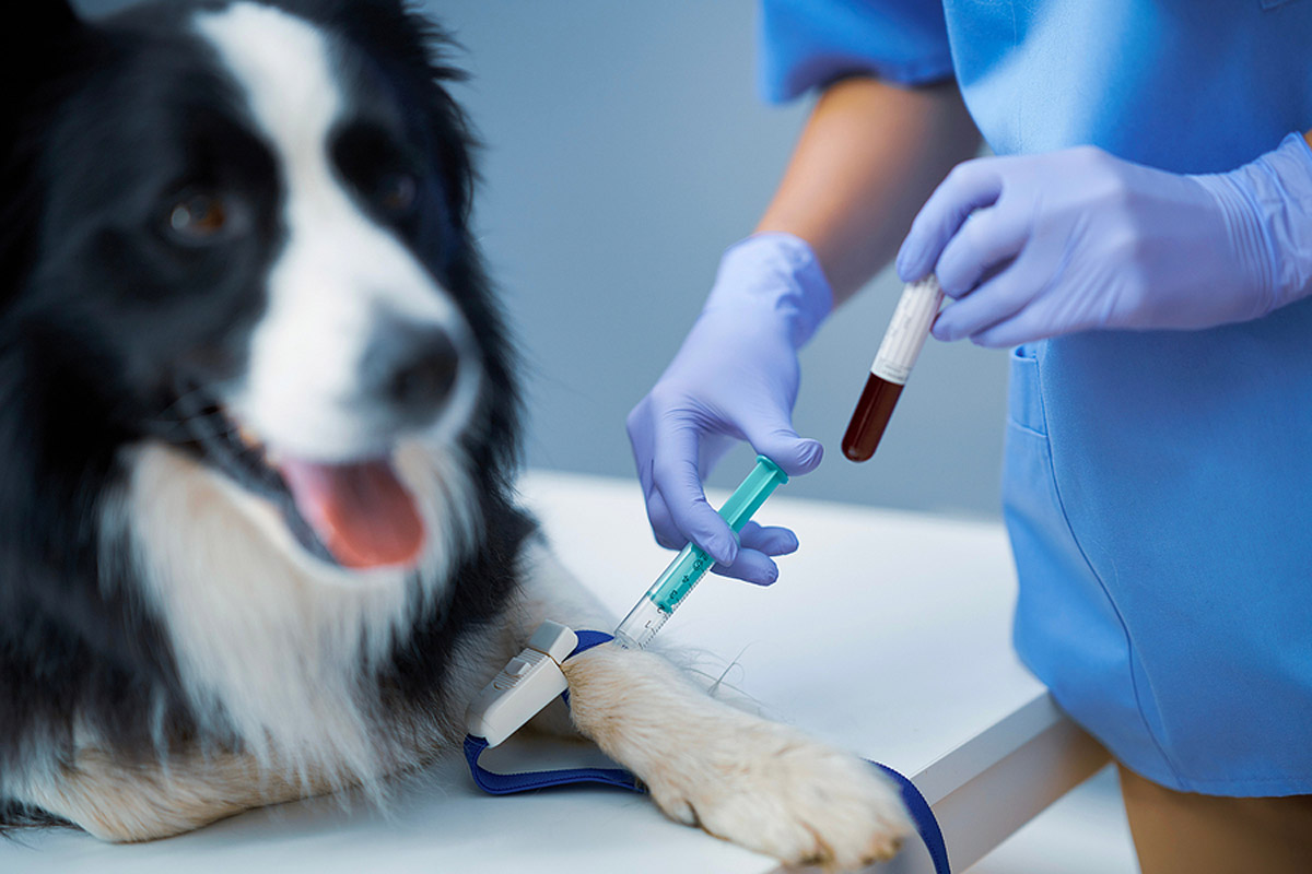 Pale Gums In Canines: Possible Causes & Treatments