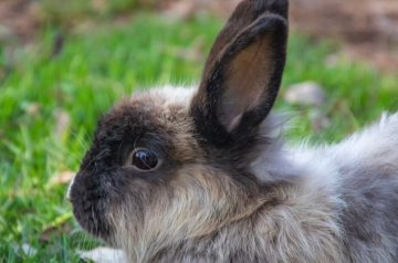 Rabbit Dental Health: What To Do With A Broken Tooth