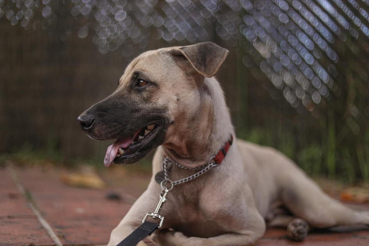 Shelter Dogs: Adopt a Man's Best Friend Today