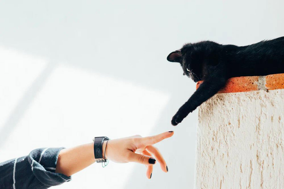 Why Cats Are Actually Smart And Sophisticated Pets