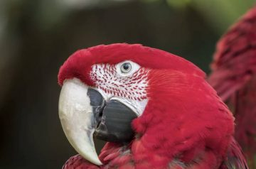 5 Reasons Why Parrots Will Make For Excellent Pets