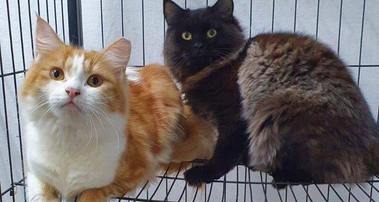 Community & Strays: Our Singapore Kitties Need Our Love Too