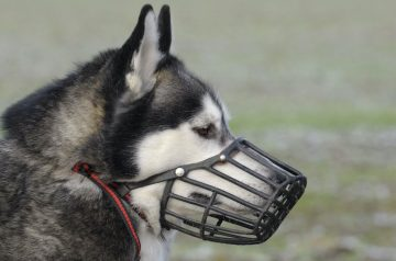 Dog Muzzles: Everything You Need To Know About Them