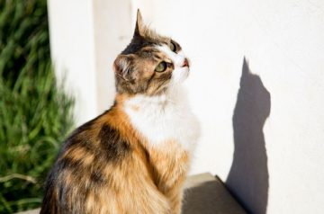 Why Cats Are Constantly Obsessed With Chasing Shadows
